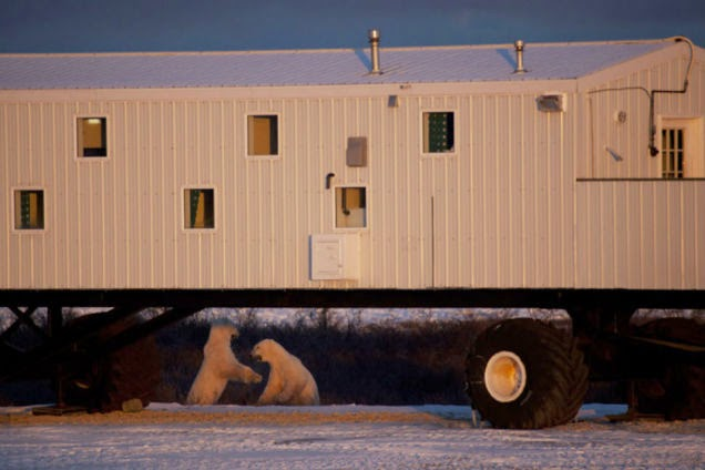Is This a Rolling Hotel or a Polar Bear Buffet?