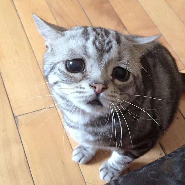 93 Foto Gambar Kucing Hormat Terlihat Keren