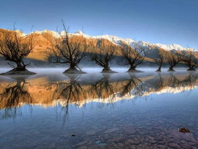 Эти деревья находятся в южной части Новой Зеландии. Фотографии были сделаны в морозное утро и только лучи Солнца напоминали о царствовавшем здесь совсем недавно тепле. © Брэд Гроув