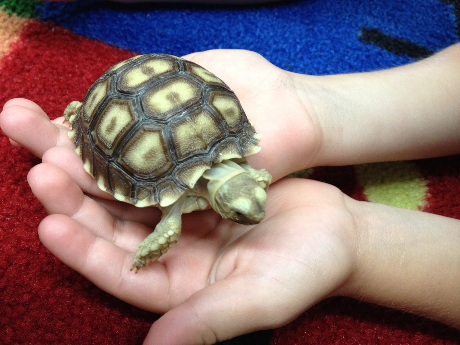Mini Pet Turtle Mini turtle for share day