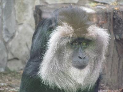 обезьяны +в санкт петербурге