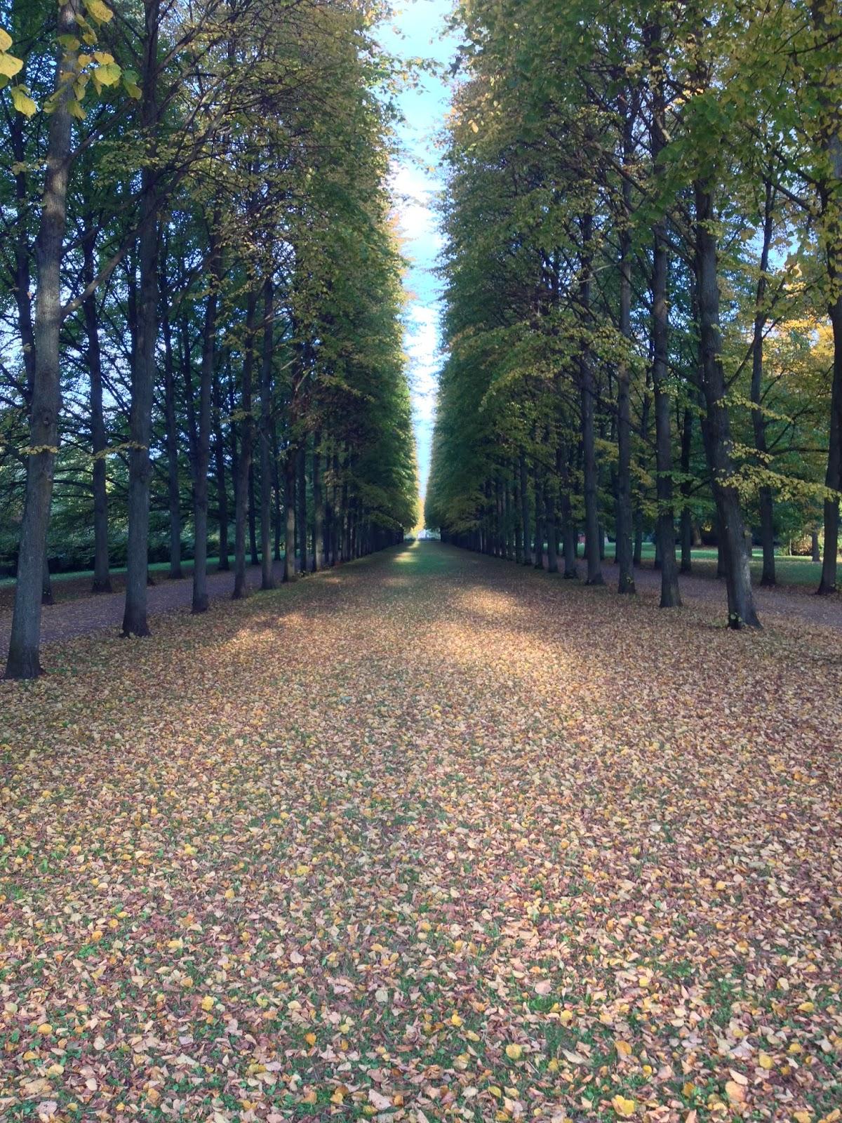 Bäume, Allee, Herbstlaub auf Boden