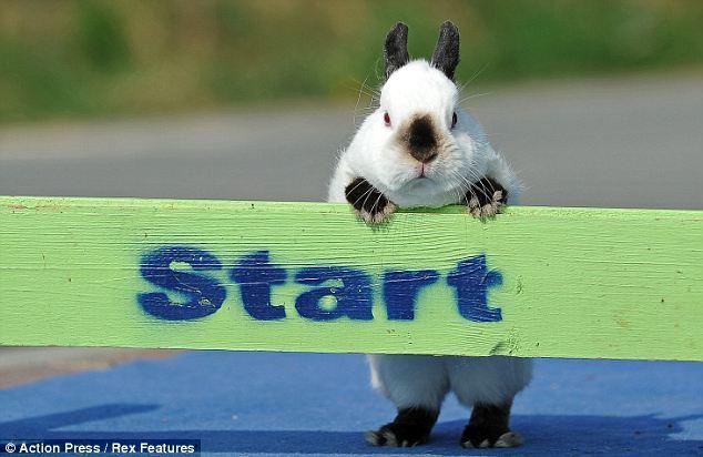 http://4.bp.blogspot.com/-6Lfliq0zZbs/Tblf3GPEgxI/AAAAAAAAApo/UA1nfsfhKA0/s1600/Rabbit%2Bdressage%2Bset%2Bto%2Btake%2Bthe%2Bworld%2Bby%2Bstorm%2B5.jpg