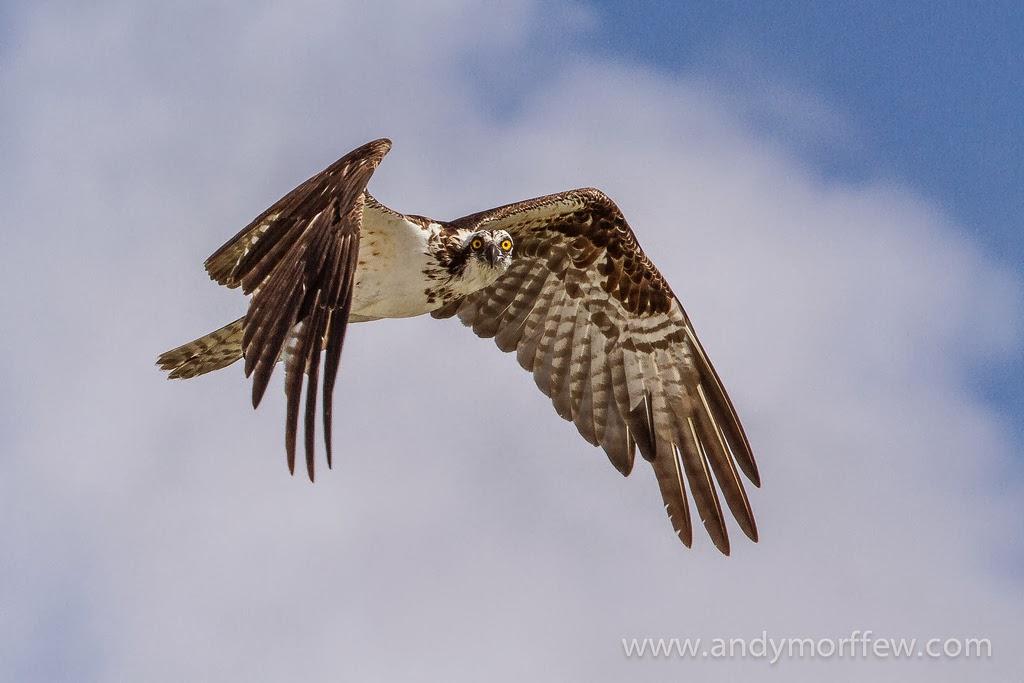 Photographing Birds in Flight – Master Focusing Technique