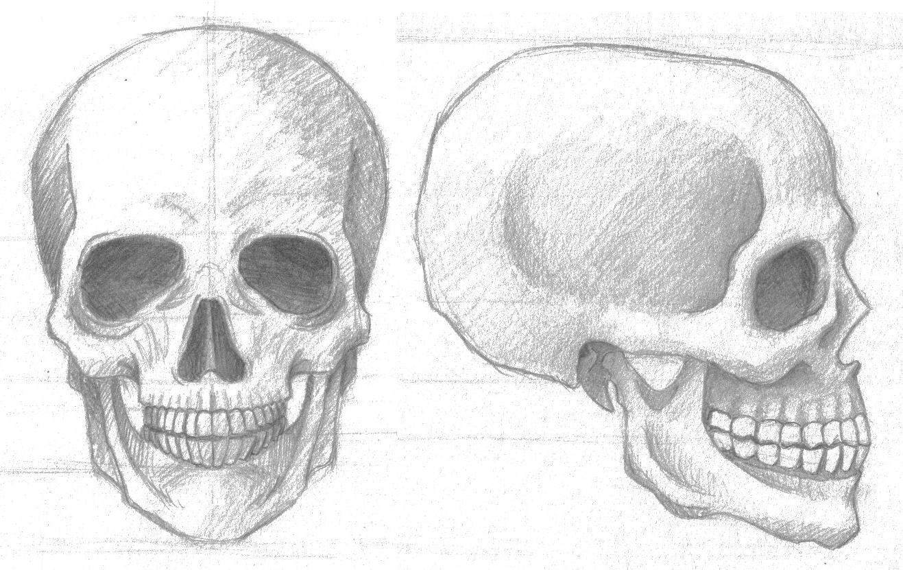 Encantador Cráneo Para Colorear Huesos Anatomía Fotos - Anatomía de ...