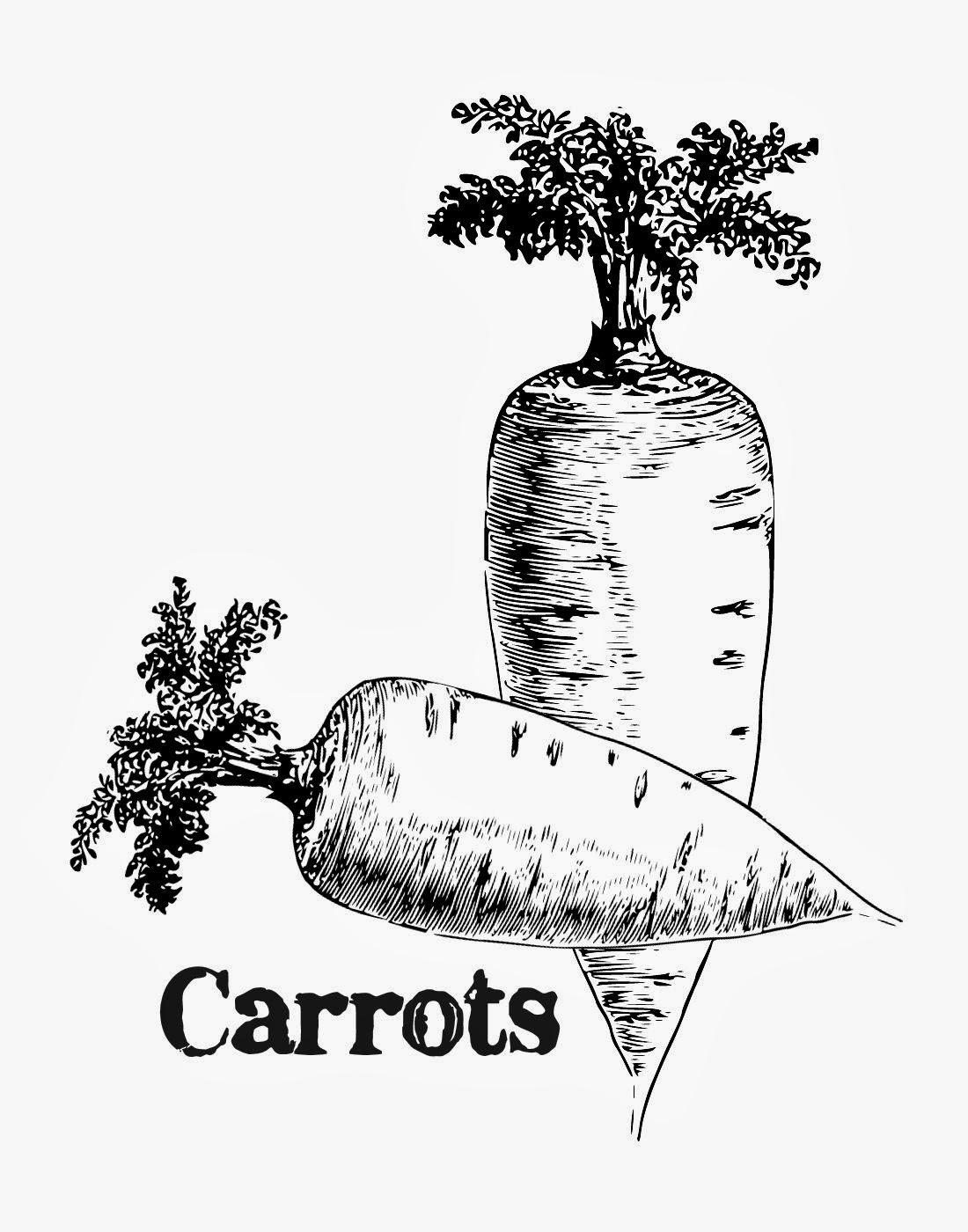 http://4.bp.blogspot.com/-6M62D8TlHl8/Uy76c82C3UI/AAAAAAAA0fs/pV0QXwLohH4/s1600/CarrotsVintageSeedAdTlcCreations.jpg