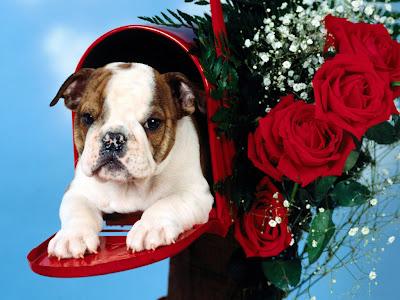 Perrito en el buzón adornado con rosas