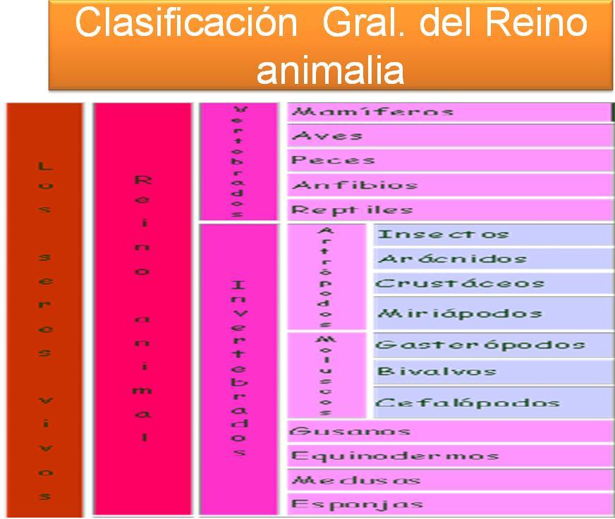 clasificacion de los animales. CLASIFICACIÒN DE LOS ANIMALES