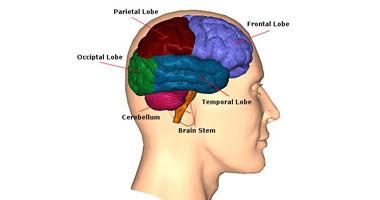 زيت الروزمارى والمكسرات يحسنان أداء المخ والذاكرة S9200819133846