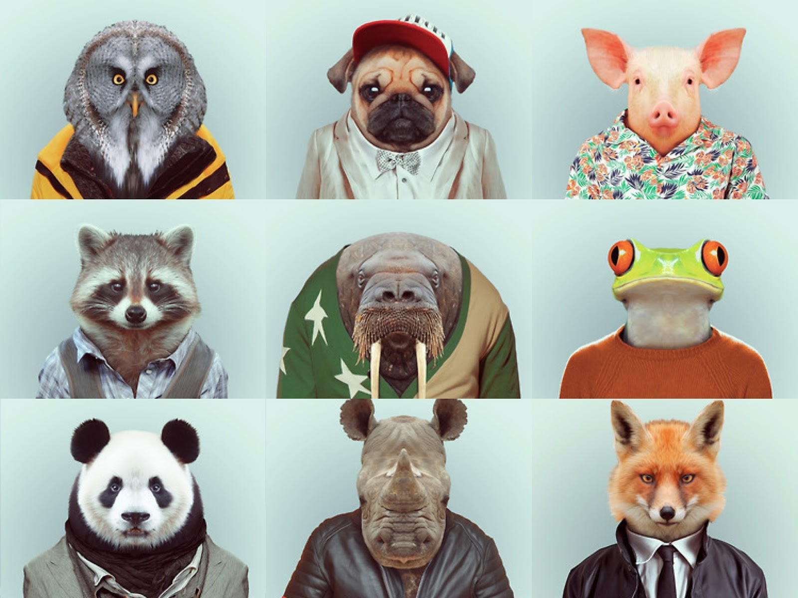 Zoo Portraits by Yago Partal & an update!