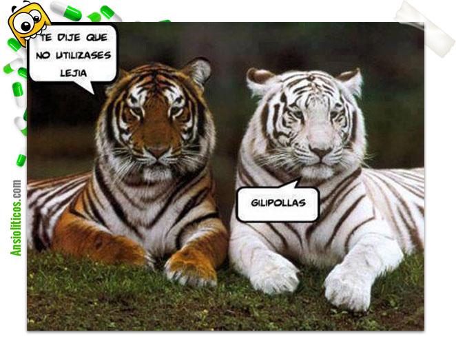 Chiste de Tigres: Lejía