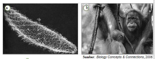 Organisasi makhluk  hidup. Makhluk  hidup  (a)  uniseluler dan (b)  multiseluler.