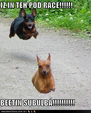 funny_dog_images+2.jpg