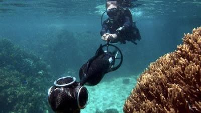 Seaview de Google te permite ver la vida submarina