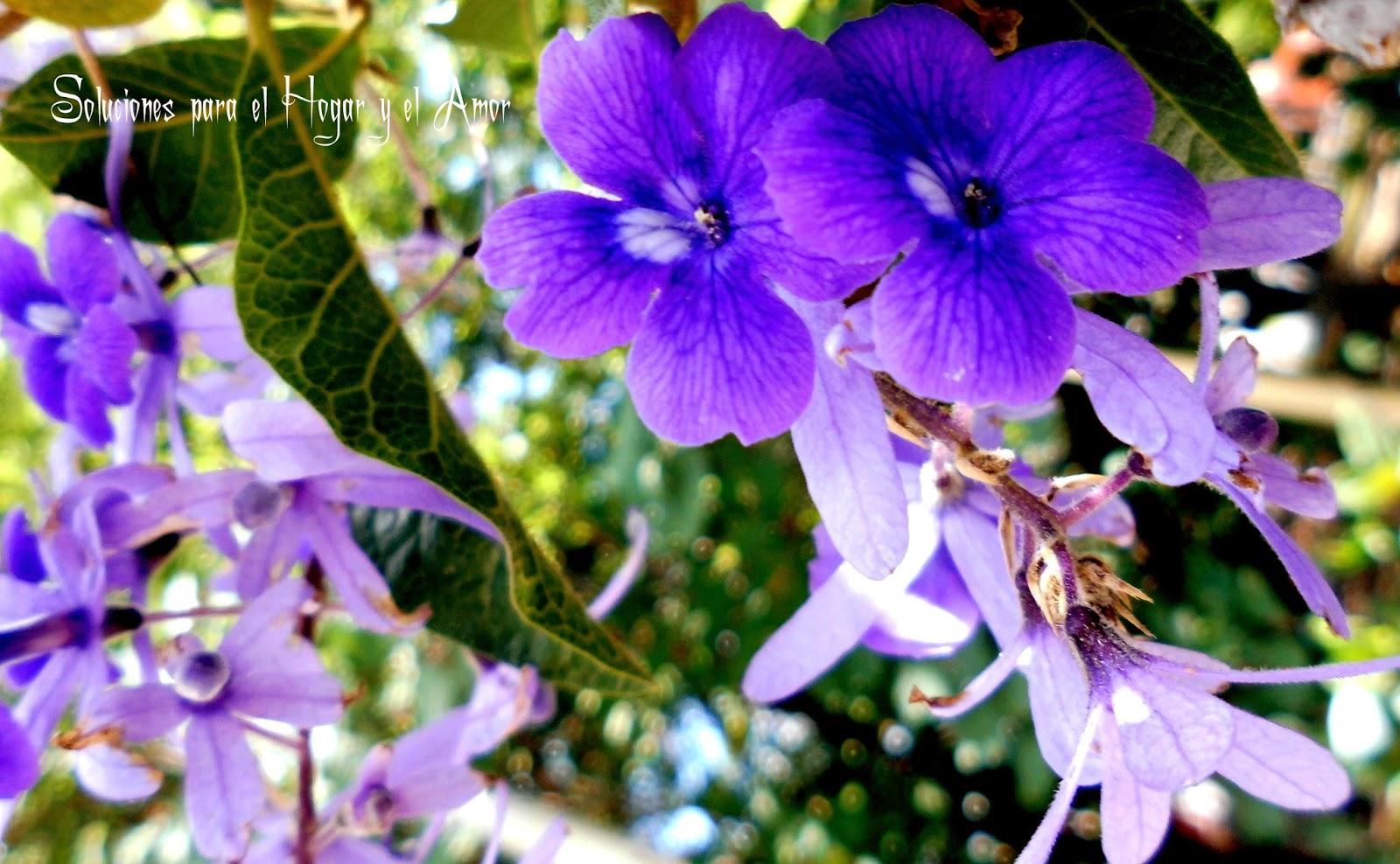 Poema de Primavera, flores moradas, luz, jardín