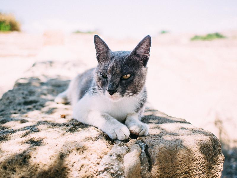cat Paphos cyprus