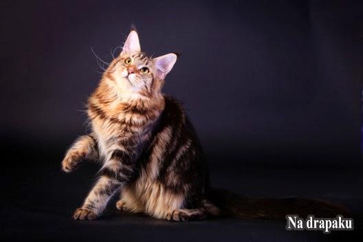 Co zrobić, gdy kot miauczy w nocy?