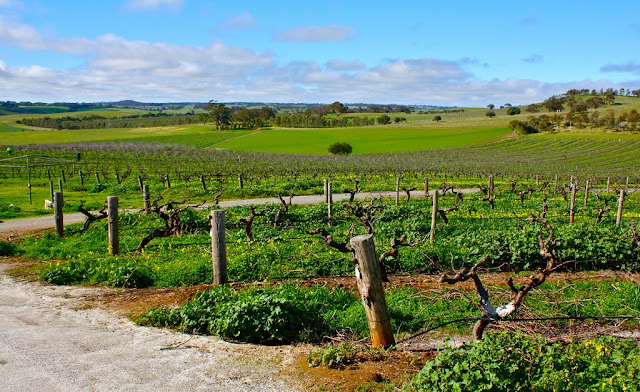Barossa Valley – SA