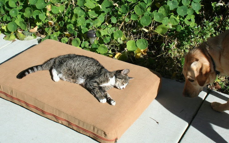 angie on the same cushion, this time on our back patio in front of some scraggly looking nasturtiums