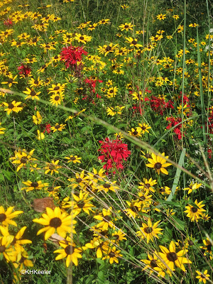 meadow, Mt. Cuba Center