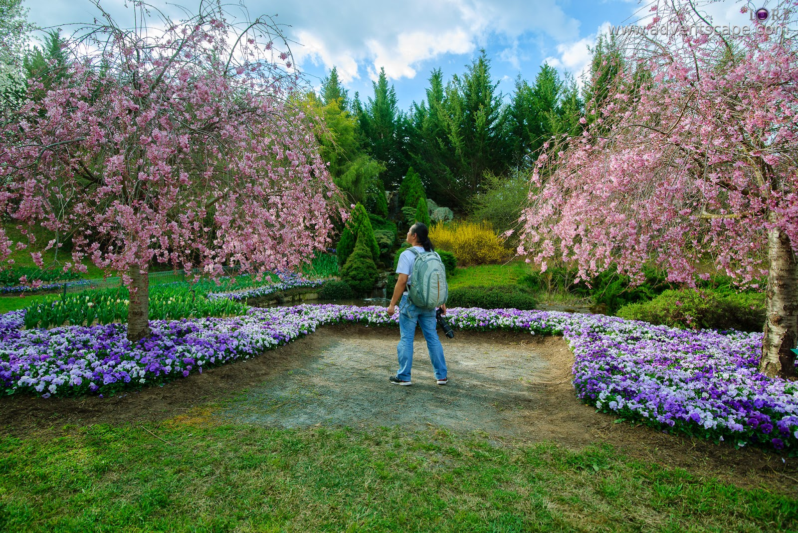 Philip Avellana, adventscape, iori, Tulip Top Gardens, garden, spring, NSW, New South Wales, Sutton, Old Federal Highway, Bywong, 2621, fountain