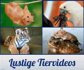 Lustige Tiervideos
