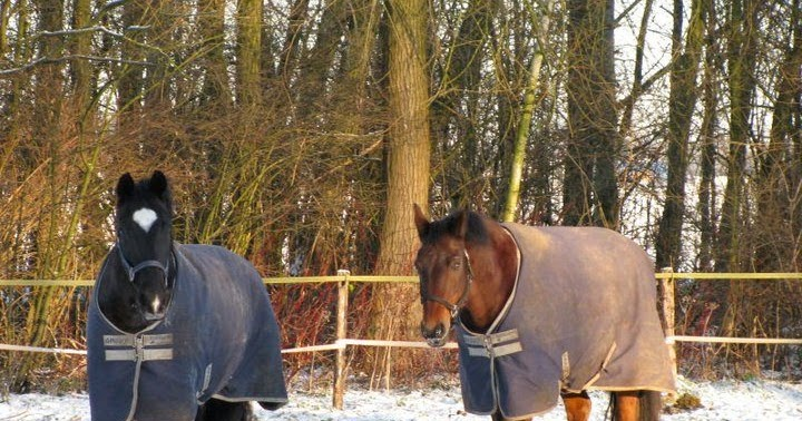 Does your sports horse need a friend?