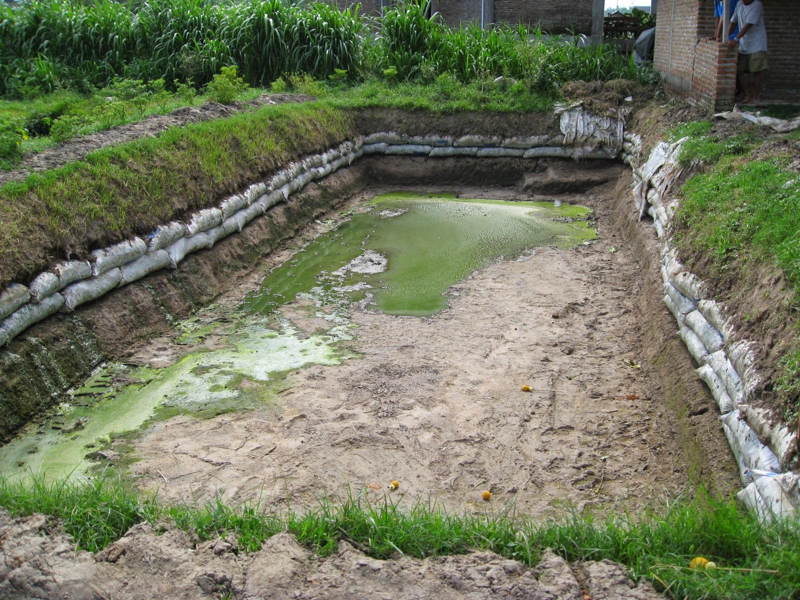 Cara Budidaya Ikan Air Tawar pada Kolam Tanah - Mina Kalibayem