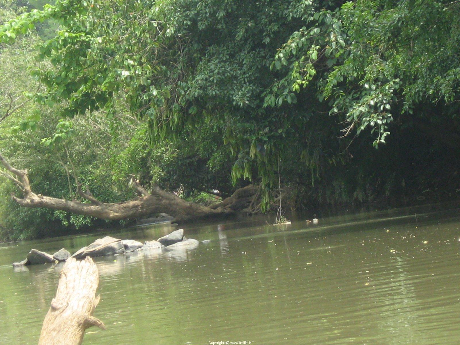 travel spots kuruvadweep wayanad kerala