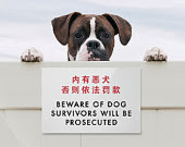 Funny Engrish sign beware dog dogs do not trespass property Australian