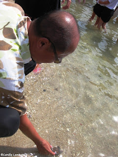 Turtles being released