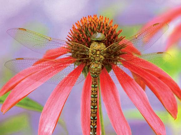 Картинки по запросу Как защитить растения от вредителей в гармонии с природой?
