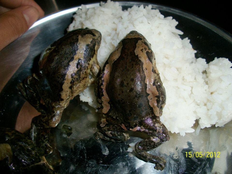 Exotic Vigan Food | Edmar is Certified Frog-Eater in 15 minutes