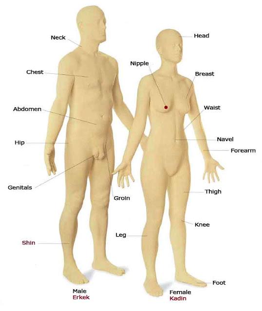 İngililizce vücudumuz ve bölümleri ingilizcesi resimli anlatım