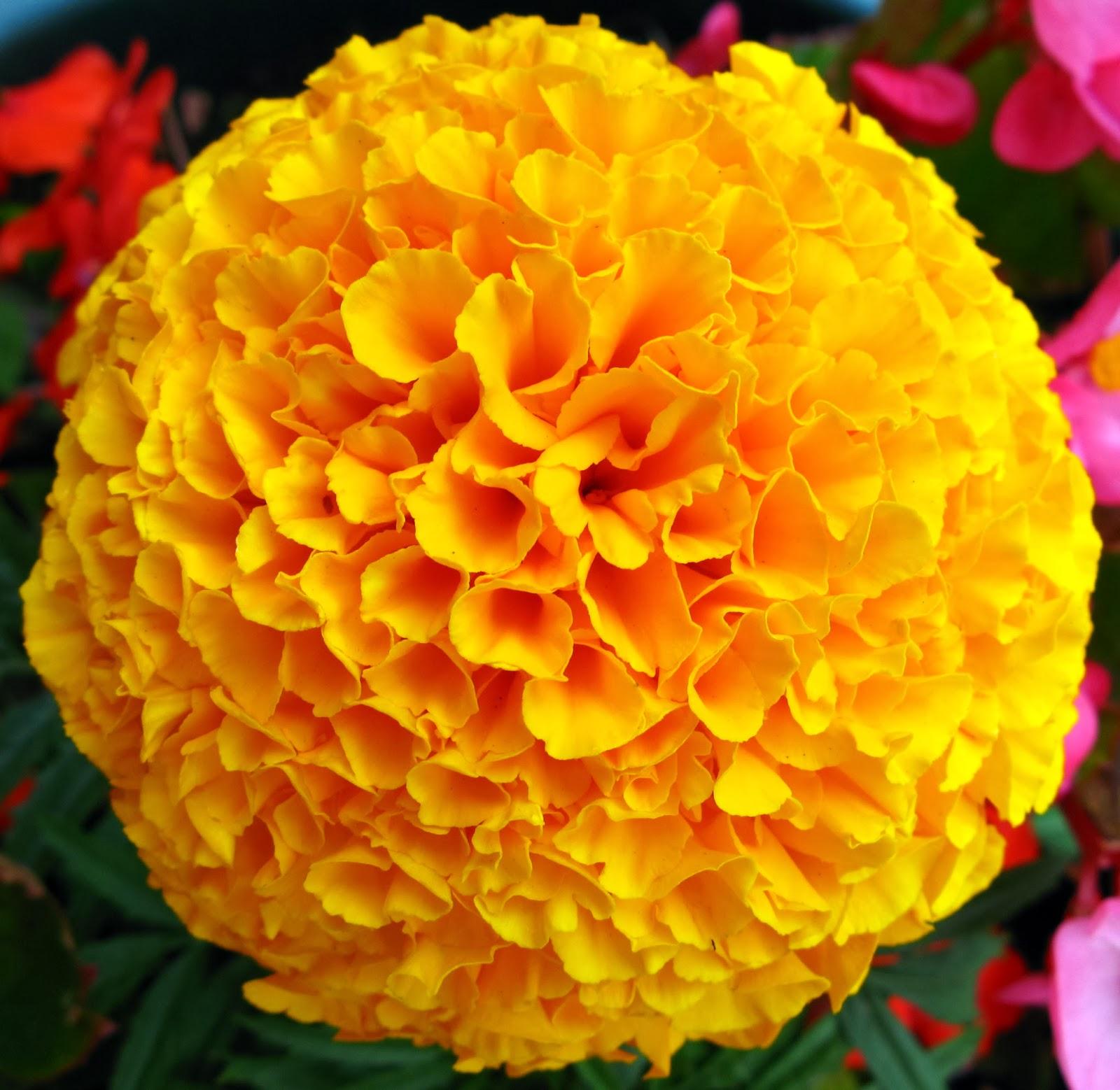 Beautiful Yellow Stylish Flowers Hd Wallpapers