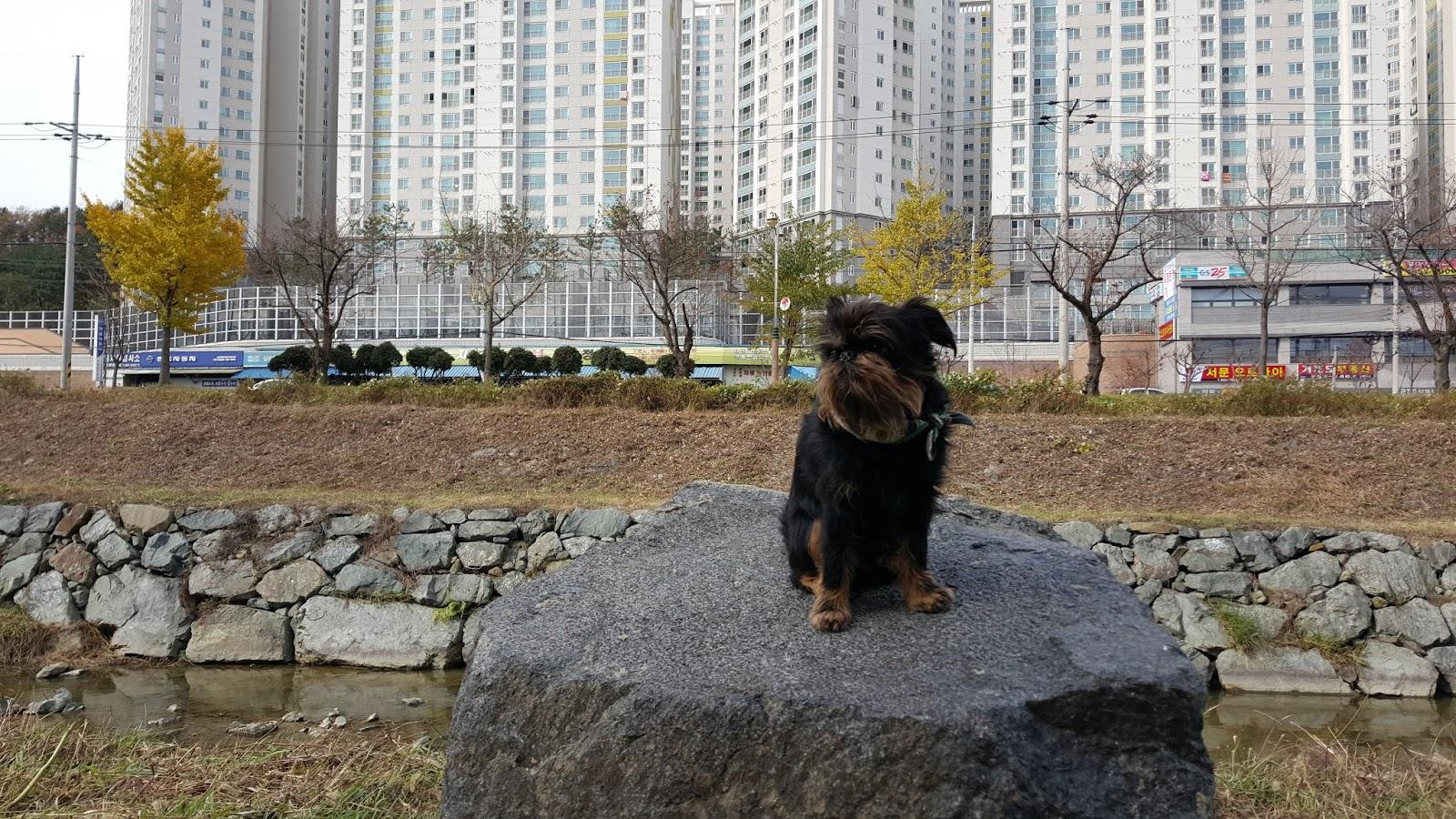 Dita i korea: trappa upp och trappa ner...
