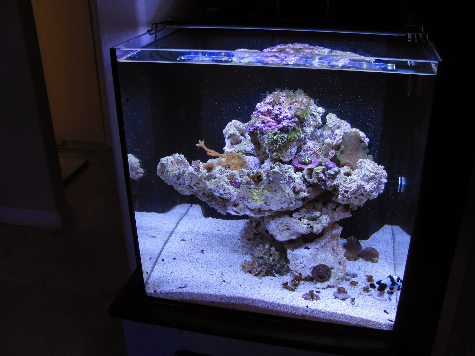 Fish aquarium lighting systems - Intensity Wise One Led Fixture Is Perfect For A Fish Only System Being Much Brighter Than I Expected I Would Think That Low Light Corals Such As