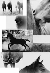 Pampa Horses