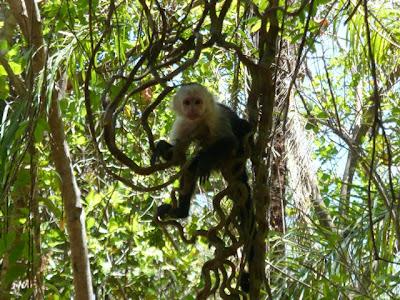 Reserva Biológica Lomas Barbudal
