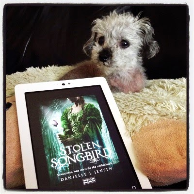 Murchie lays on a fuzzy white pillow with a sheep's head. In front of him is a white Kobo with Stolen Songbird's cover on its screen. It features a white girl clad in a green, vaguely Medieval dress. She holds a glowing glass rose.
