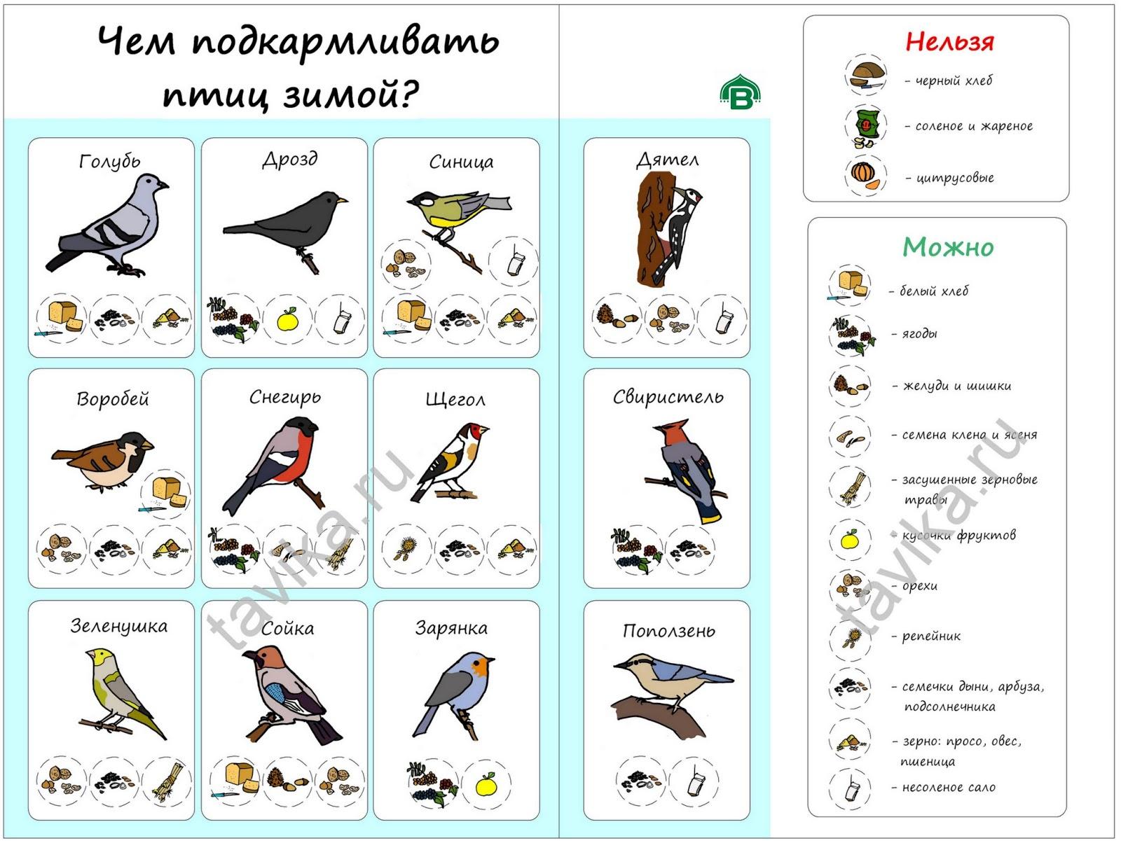 Плакат Чем кормить птиц зимой