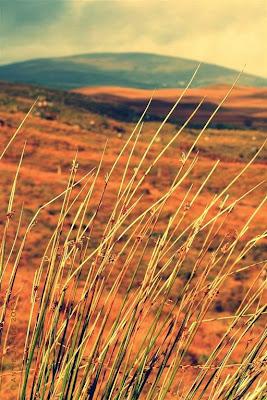 connemara gold © Annie Japaud 2013