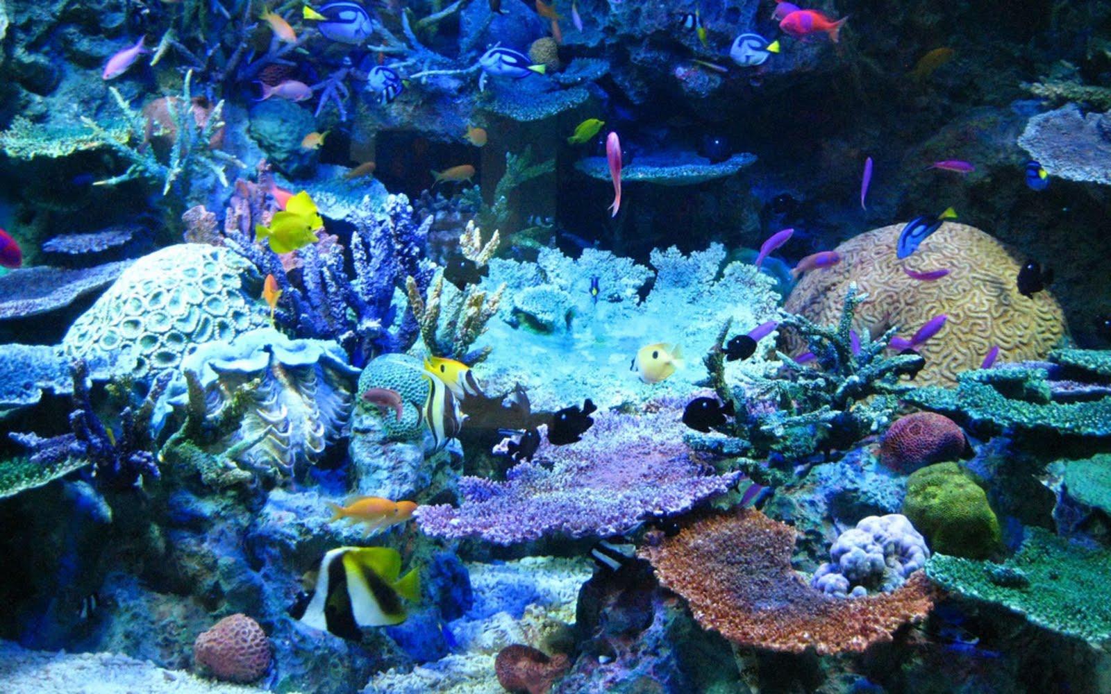 Image result for pics inside ocean aquarium colorful fish