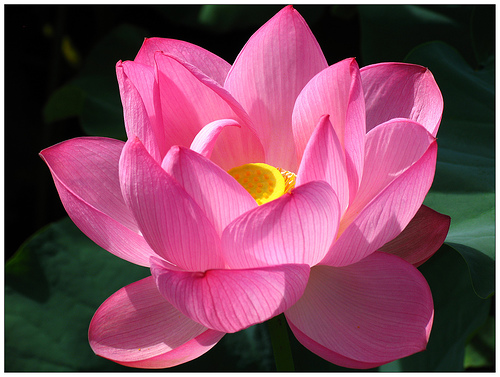 60 Tatuajes orientales Japoneses Taringa! - Imagenes De Flores Orientales