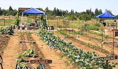 SoilBorn Farm