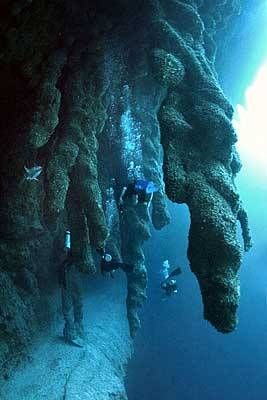 Charming Great blue hole belize diving right!