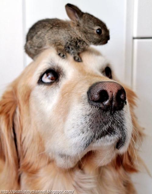 Dog and small bunny.