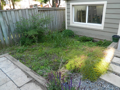Xeriscape Leslieville garden install before by Paul Jung Gardening Services Toronto
