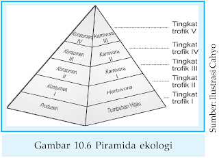 Piramida Ekologi - Piramida Ekosistem