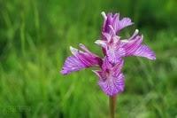 Dos horas de orquídeas